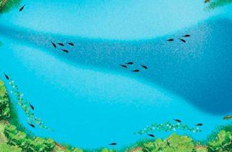 Смотрим под воду: правильное определение ям, глубин, мест обитания и кормления рыб