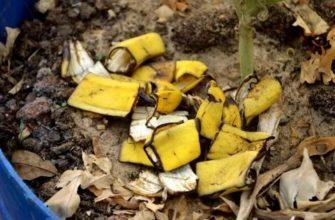 Удобрение из банановых шкурок на огороде