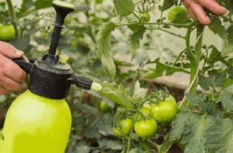 Подкормка томатов йодом в теплице: все нюансы и личный опыт