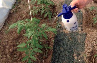 Сода для огурцов: какой эффект дает, когда применяется, в домашних условиях, в качестве удобрения, для профилактики, особенности применения