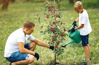 Когда и как поливать плодовые деревья весной, особенности весеннего полива