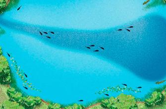 Речная терминология, что такое речная лоция, изучаем реки, рельеф реки, течение реки, перекаты, пороги, элементы русла реки, купить лодку на подводных крыльях, купить яхту