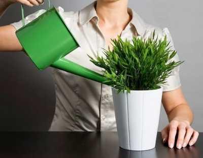 Правила полива комнатных растений: чем, когда и как поливать?