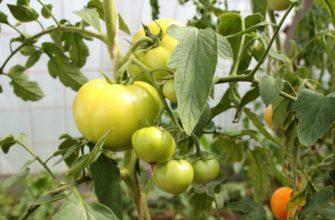 Применение соды для томатов: в огороде, саду, на даче, отзывы |